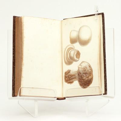 Traité de la culture des champignons. Contenant la manière de les faire venir dans les caves, les carrières, les appartements et en plein air.