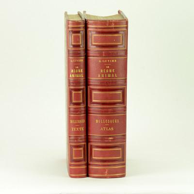Le règne animal distribué d'après son organisation, pour servir de base à l'histoire naturelle des animaux, et d'introduction à l'anatomie comparée. Les MOLLUSQUES. Volume de texte + atlas.