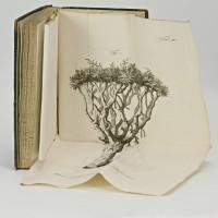 Scriptores de plantis hispanicis, lusitanicis, brasiliensibus, adornavit et recudi curavit J. J. Römer. M. D.